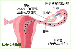 输卵管不孕怎么检查的